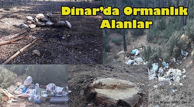 DİNAR'DA ORMANLAR SAHİPSİZ