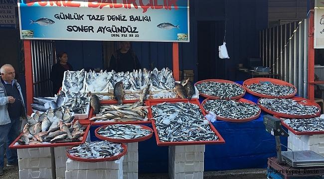 Dinar'da 20 çeşit Balık Görücüye çıktı