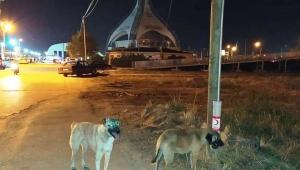 Sokak hayvanları için Akıllı yemlikler yerleştirdiler..