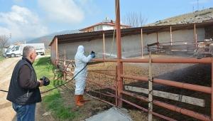 Dinar'da Karasinek ve larva ilaçlama çalışmaları başladı