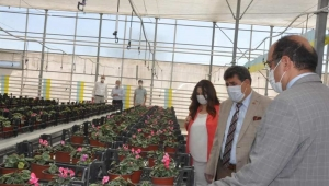 Tortop Belediye Çiçek Serasını Ziyaret Etti.