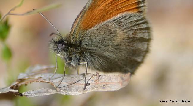 Cem Akın'ın kelebek fotoğrafları hayran bıraktı