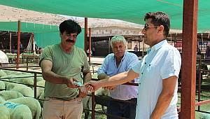 Dinar'da kurban pazarı başladı