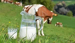 Ticari süt işletmelerince Haziran ayında 880 bin 367 ton inek sütü toplandı