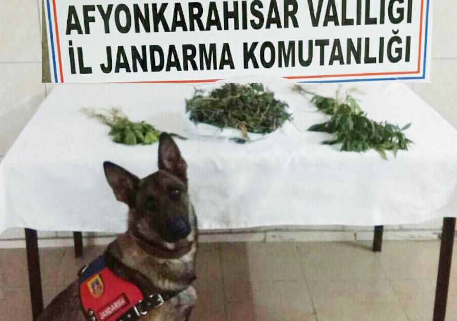 Jandarma Ekiplerinden Bolvadin Dişli'de Uyuşturucu Operasyonu