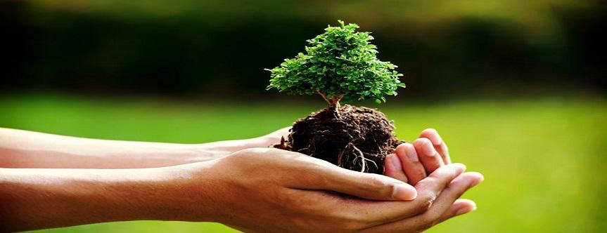 Afyonkarahisar'ın Orman Alanı Arttı…