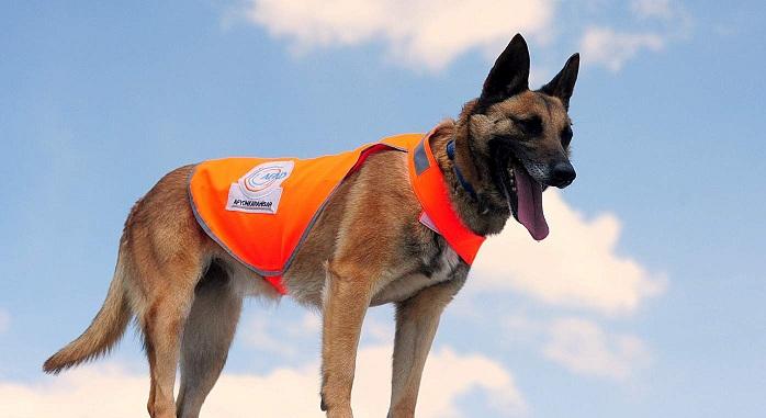 Köpekli Arama Timleri Yeterlilik Sınavı Başvurusu Başladı