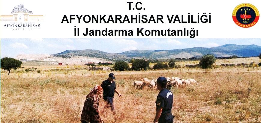 Kaybolan 60 Koyunu Jandarma Buldu..
