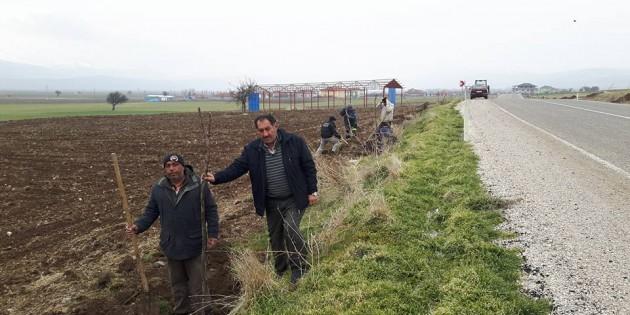 Haydarlı Belediye Başkanı Kadir öcel Yol Güzergahlarını Ağaçlandırıyor